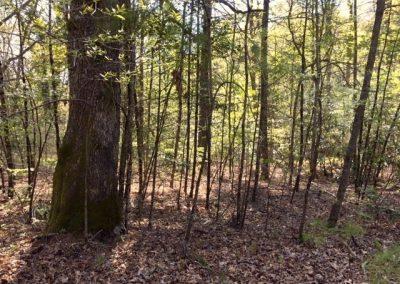 004 Robin Hood Road #R4 – MLS #3274159